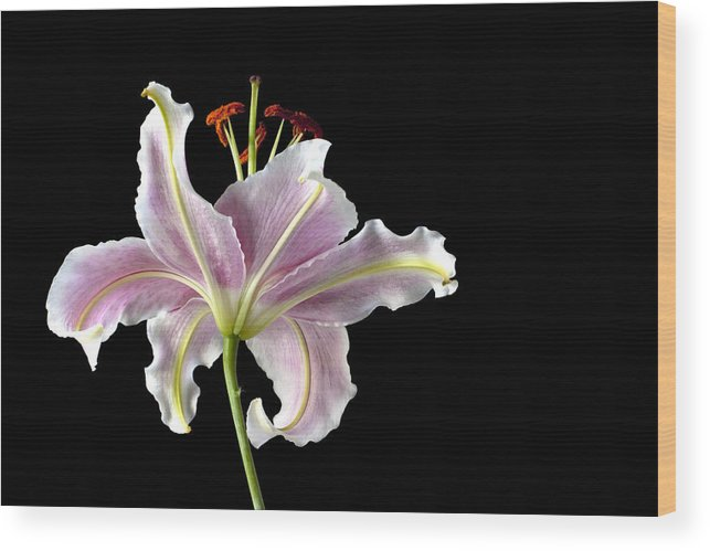 Lily Wood Print featuring the photograph Lily Up Close by Chandru Murugan