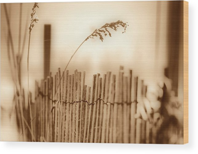 Beach Fence Wood Print featuring the photograph Limitations by David Keith