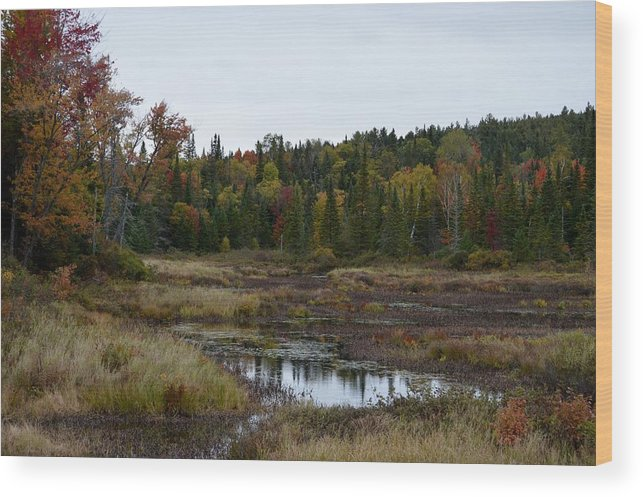 Fall Wood Print featuring the photograph Living Fall by Thomas Phillips