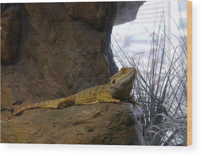 Lizard Wood Print featuring the photograph Lizard Of Oz by Richard Reeve