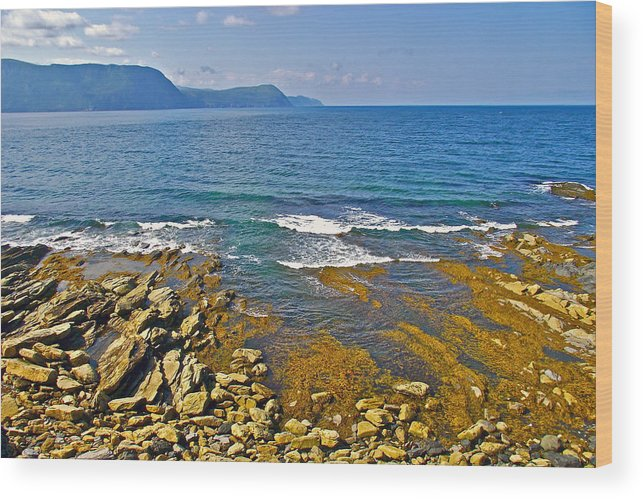 Lobster Cove From Green Point Coastal Trail In Gros Morne Np Wood Print featuring the photograph Lobster Cove In Rocky Harbour-nl by Ruth Hager
