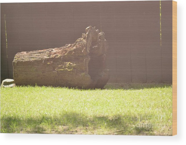 Log Wood Print featuring the photograph Log In Hazy Sunlight by Dennis Godin