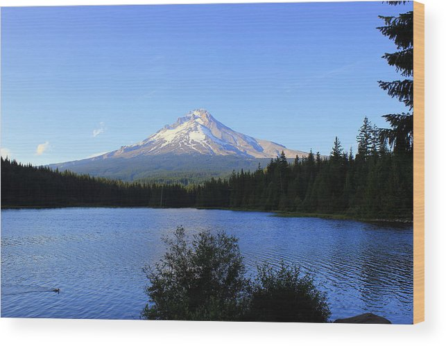 Trillum Lake Wood Print featuring the photograph Lone Duck by Debra Kaye McKrill