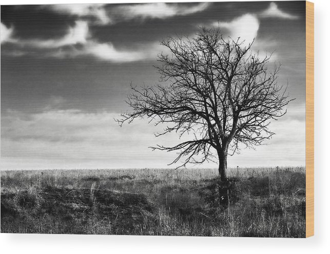 Tree Wood Print featuring the photograph Lone Tree 2 by Eric Benjamin