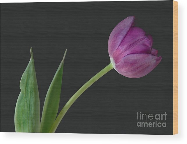Flower Wood Print featuring the photograph Looking Ahead by Dan Holm
