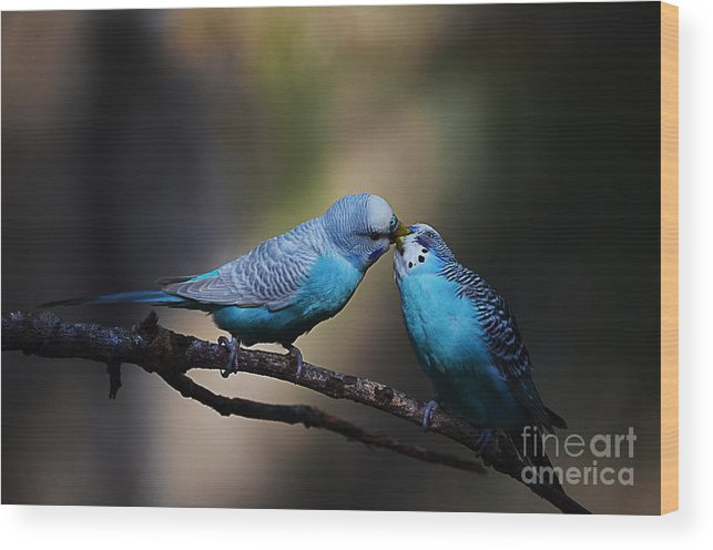Scenery Wood Print featuring the photograph Love Birds by Hilton Barlow