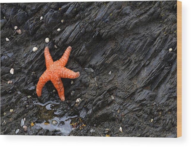 Star Wood Print featuring the photograph Low Tide by Kirk Siegler