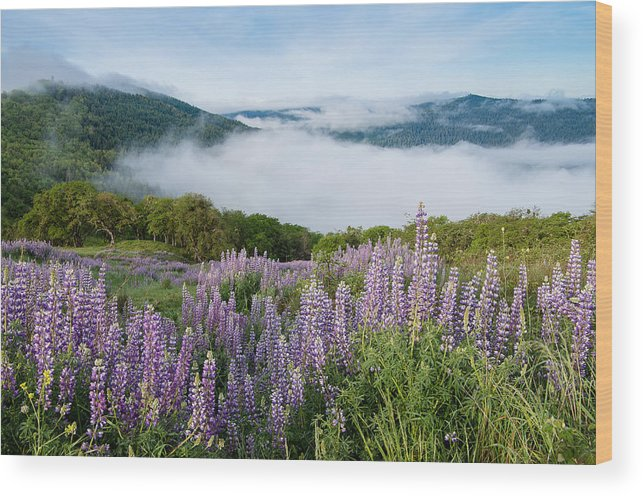 Lupine Wood Print featuring the photograph Lupine Of Bald Hills by Greg Nyquist