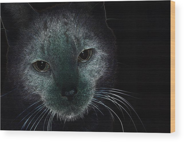 Cat Wood Print featuring the photograph Madness by Janna Nace