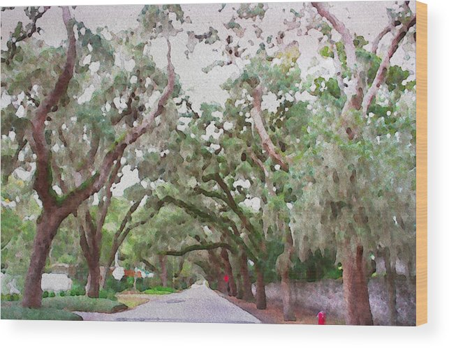 Magnolia Avenue St Augustine Florida Street Trees Treed Hammock Oaks Alicegipsonphotographs Wood Print featuring the photograph Magnolia Avenue by Alice Gipson