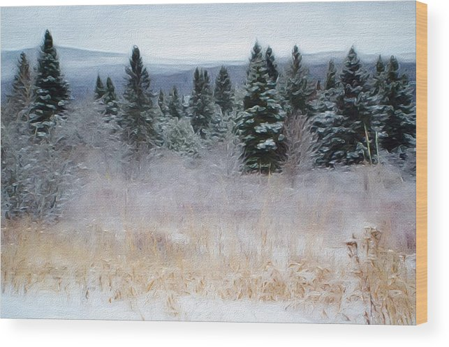 Maine Woods Wood Print featuring the photograph Maine Woods by Shellaine Rollins