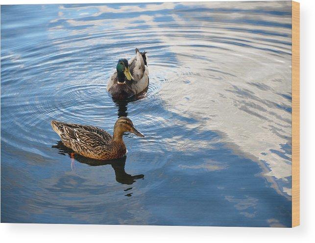 Ducks Wood Print featuring the photograph Mallards Lake Hopatcong Nj by Maureen E Ritter