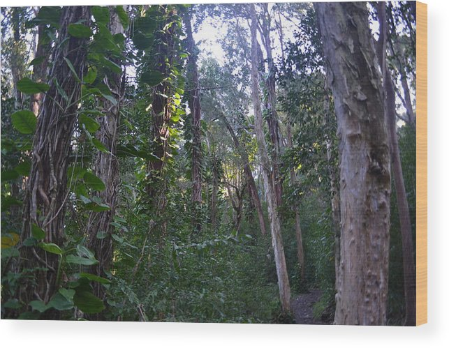 Maui Wood Print featuring the photograph Maui Forest by Evan Silver