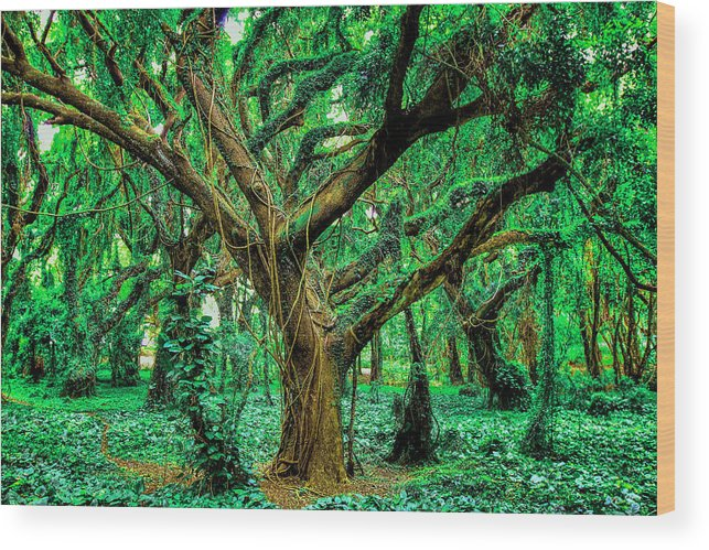 Funny Wood Print featuring the photograph Maui Tree by Robert Aycock