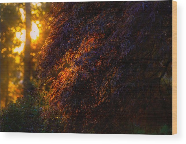 Morning Wood Print featuring the photograph Morning Glow by Gavin Baker