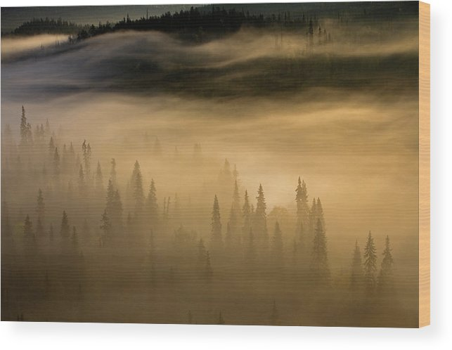 Aerial View Wood Print featuring the photograph Morning Mist From The Paahkanankallio by Peter Essick