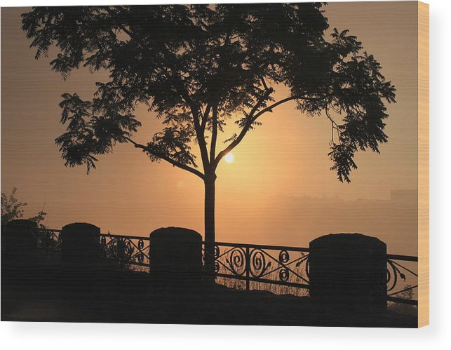 Tree Wood Print featuring the photograph Morning Sunrise by Bruno Campagiorni