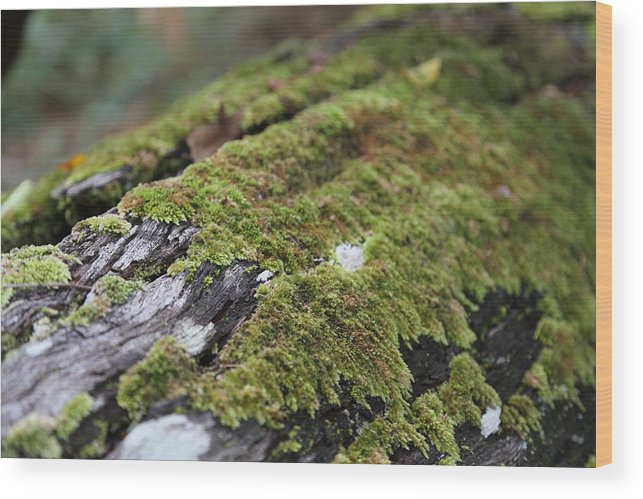 Moss Wood Print featuring the photograph Mossy Log by Keith Hawley