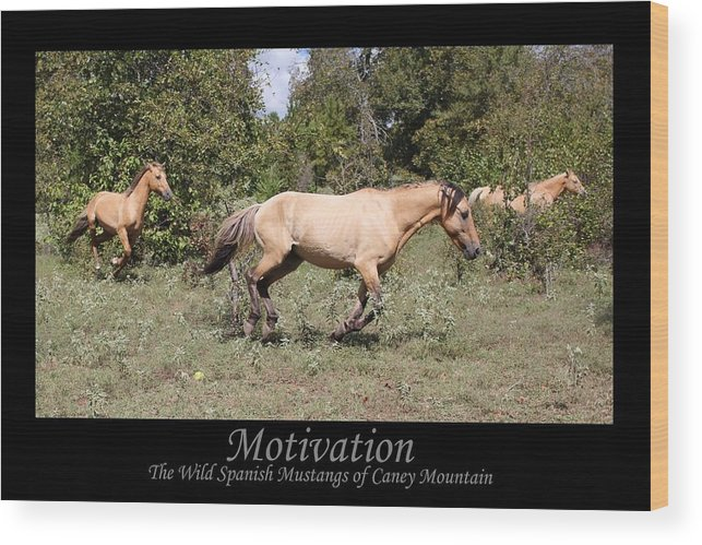 Horse Wood Print featuring the photograph Motivation by Designs And Images