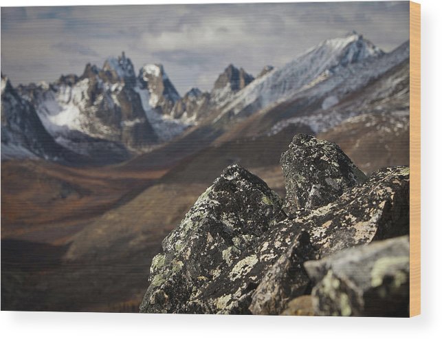 Snow Wood Print featuring the photograph Mount Monolith From Grizzly Lake by Paul Zizka