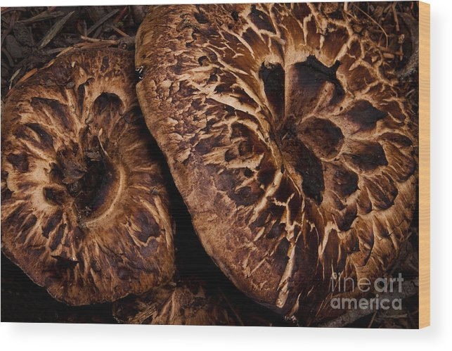 Mountain Mushrooms Wood Print featuring the photograph Mountain Mushrooms  #3670 by J L Woody Wooden