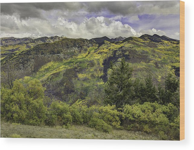 Landscape Wood Print featuring the photograph Mountains Of Color by Bill Sherrell