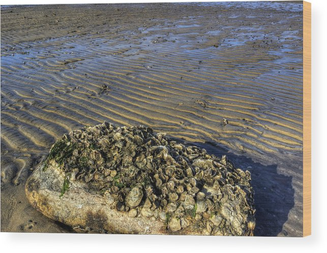 Beach Wood Print featuring the photograph Muscle Beach by David Dufresne