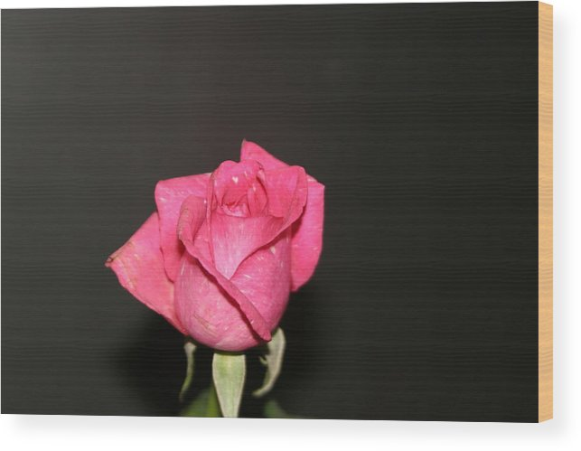 Rose Wood Print featuring the photograph My Rose by Dervent Wiltshire