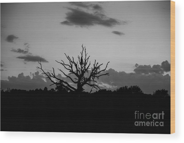 Naked Tree Wood Print featuring the photograph Naked Tree by Mina Isaac
