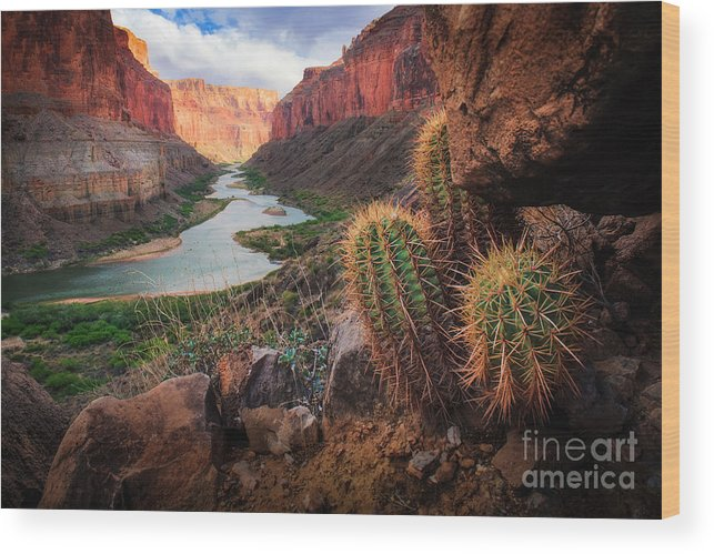 America Wood Print featuring the photograph Nankoweap Cactus by Inge Johnsson