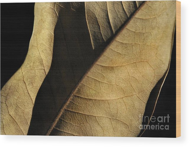 Nature Wood Print featuring the photograph Natural Seduction by Dan Holm