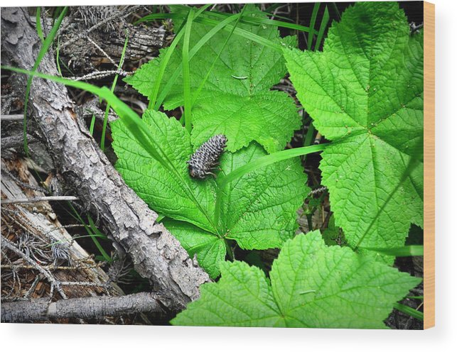 Nature Wood Print featuring the photograph Nature's Canvas by Lisa Holland-Gillem
