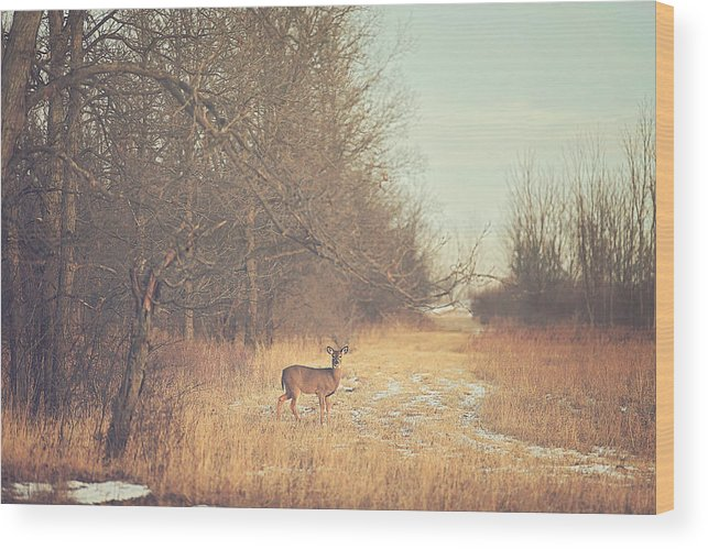 November Wood Print featuring the photograph November Deer by Carrie Ann Grippo-Pike