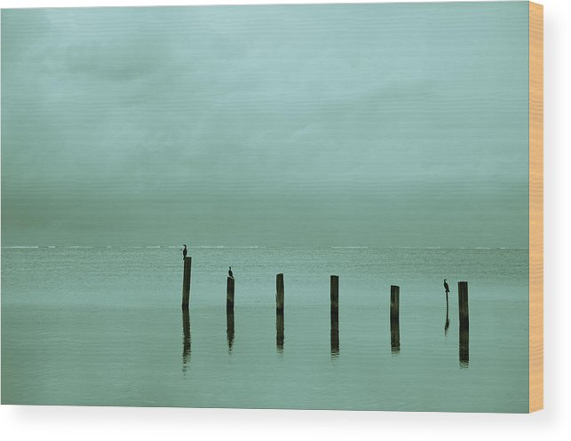 Belize Wood Print featuring the photograph Oceanic Tranquility by Zina Zinchik