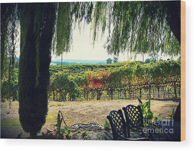 Wine Country Wood Print featuring the photograph Off Into The Horizon Wine Country Views by Amy Delaine