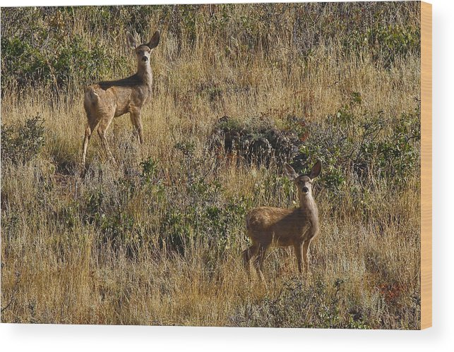 Black Mesa Wood Print featuring the photograph Oh Deer by Charles Warren