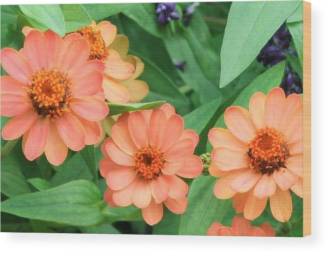 Olbrich Garden Wood Print featuring the photograph Olbrich Garden View 2 by Natural Focal Point Photography