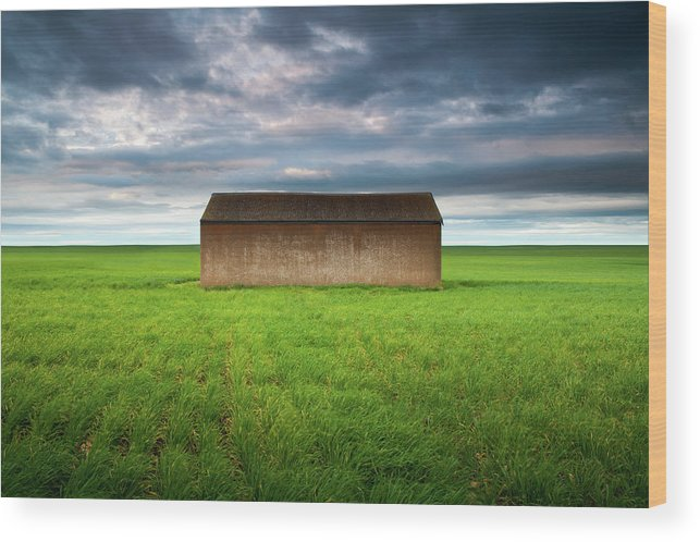 Tranquility Wood Print featuring the photograph Old Farm Shed In Green Wheat Field by Robert Lang Photography