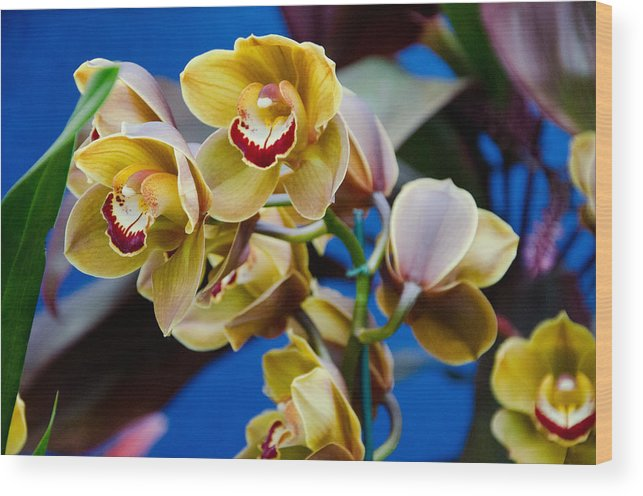 Orchid Wood Print featuring the photograph Orchid Pt 1 by Heidi Kleva