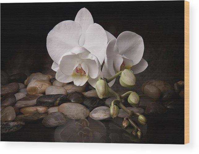 Arrangement Wood Print featuring the photograph Orchid - Sensuous Virtue by Tom Mc Nemar