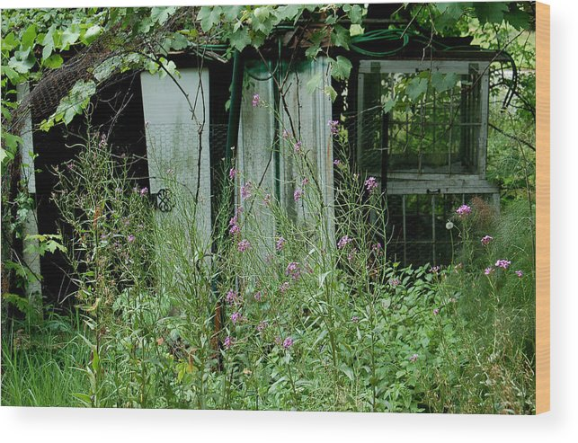 Rural Wood Print featuring the photograph Overgrown by Suzanne Gaff