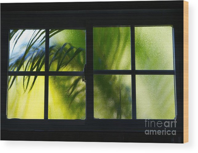 Frosted Glass Wood Print featuring the photograph Palm In A Window by Cheryl Hurtak