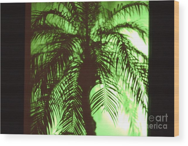 Landscape Wood Print featuring the photograph Palm Tree by Peter Dombrowski