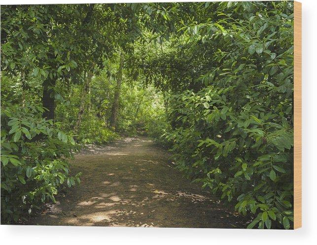 Beautiful Wood Print featuring the photograph Path by Svetlana Sewell