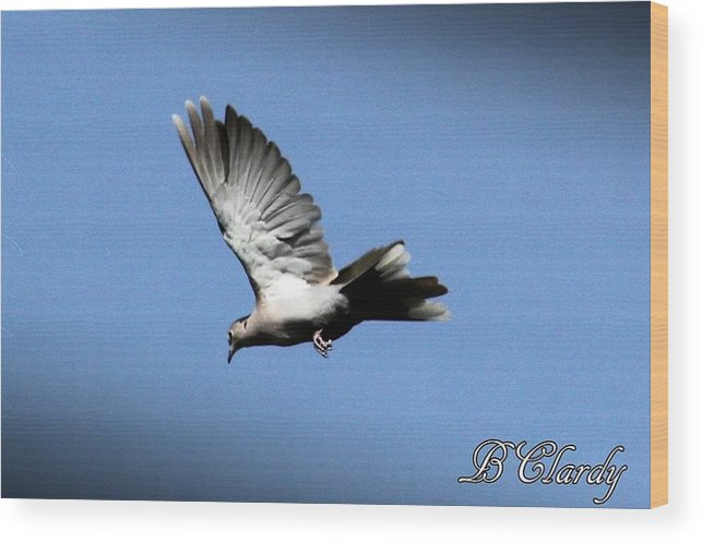 Dove Wood Print featuring the photograph Peace by Bridget Clardy