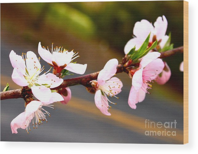 Flowers Wood Print featuring the photograph Peach Blossoms 2 by Harmony Hancock