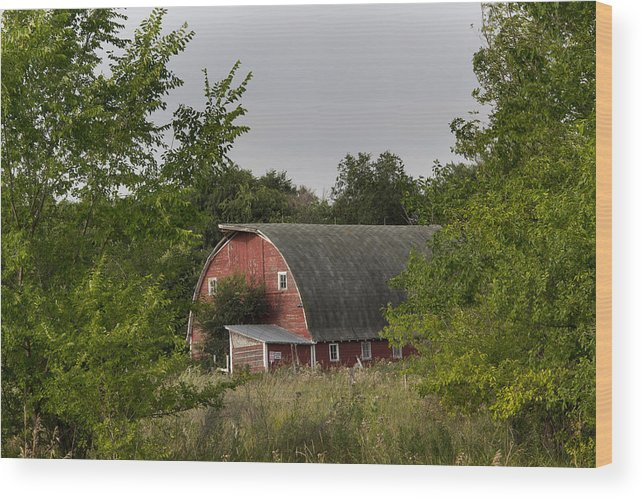 60d Wood Print featuring the photograph Peakin Through by Scott Grassel
