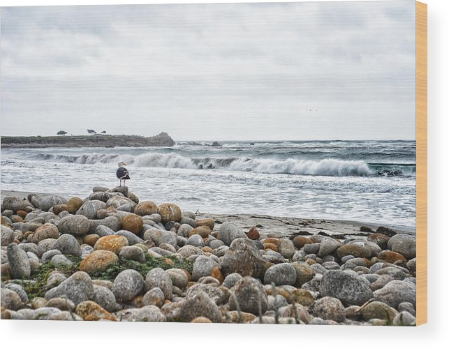 Awesome Wood Print featuring the photograph Pebble Beach by Bhanu Mohan