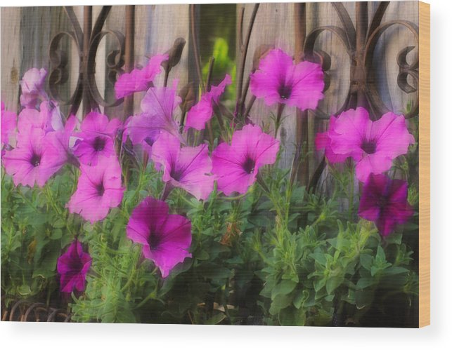 Pink Wood Print featuring the photograph Pink Beauties by Jim Vance