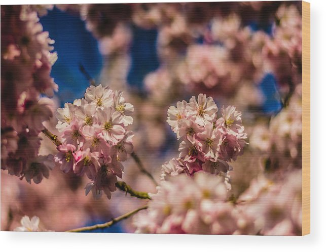 God's Creation Wood Print featuring the photograph Pink Petal Profusion by Brian Xavier